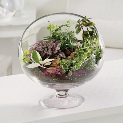 EV 110-11 Terrarium Treat