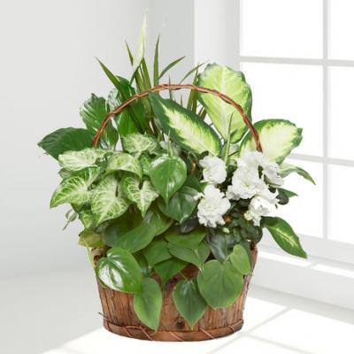 RFA-9503 Azalea Planter Basket